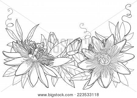 Vector garland with outline tropical Passiflora or Passion flowers, bud, leaves and tendril isolated on white background. Ornate floral elements in contour style for summer design and coloring book.