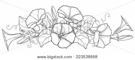 Vector bunch with outline Ipomoea or Morning glory flower bell, leaf and bud in black isolated on white background. Perennial climbing plant in contour style for summer design and coloring book.