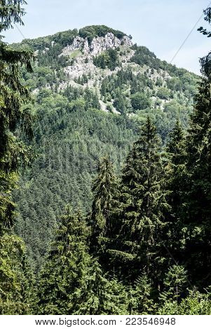 partly rocky limestone hill with forest and clear sky above - Hoblik hill near Zilina city in Slovakia during nice summer day