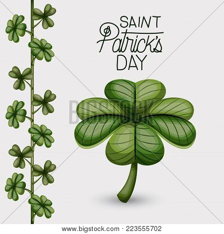 poster saint patricks day with clover of four leaves and climbing plant of clovers in colorful silhouette over white background vector illustration