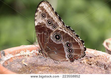 Butterfly quiet, in realx, Farfalla bellissima a riposo