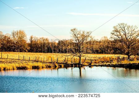 A nice rural pond landscape on a farm with two prominent trees at waters edge.