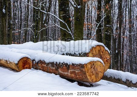 logs on the snowy slope in forest. lovely nature scenery in winter