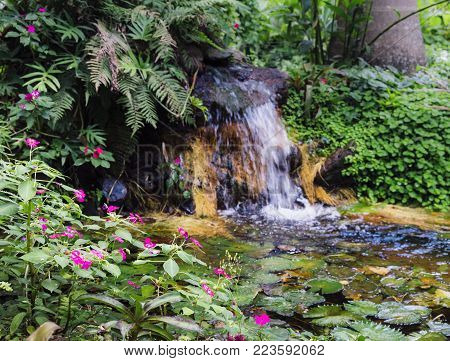 Water lillies, Nymphaeaceae, in tropical Brazilian rain forest with waterfall