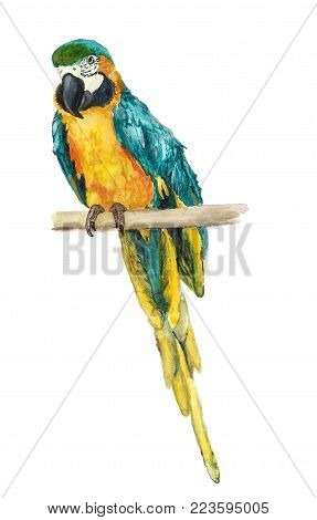 Watercolor Blue-and-yellow Macaw