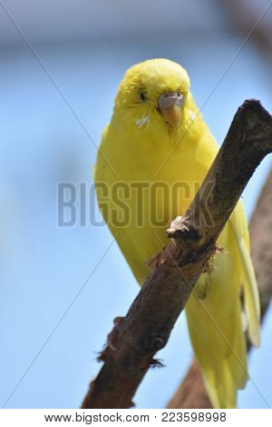 Adorable Little Yellow Budgie In the Rainforest
