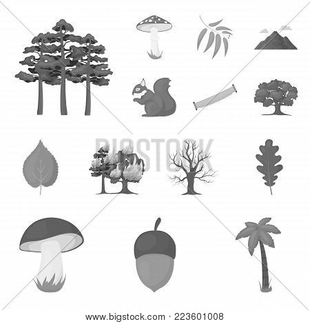 Forest and nature monochrome icons in set collection for design. Forest life vector symbol stock  illustration.