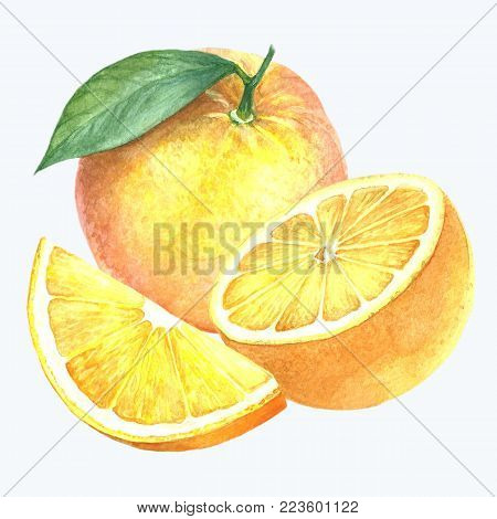 A collection of watercolors. Citrus fruits on a flowering branch. A piece of orange fruit. A set of illustrations. Hand drawing. Isolated image on white background.