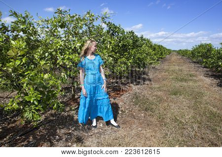 The woman in a long blue dress on a plantation of oranges, Cuba