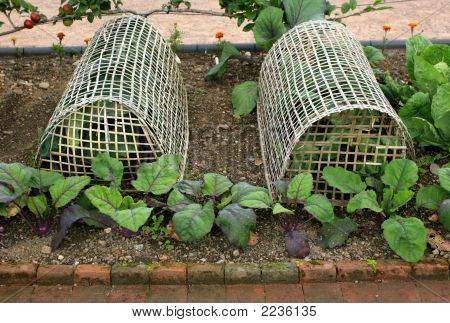 Vegetable Protection