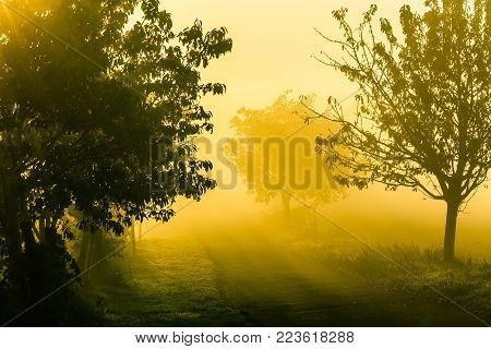 Amazing nature landscape with trees and country road in morning fog. Autumn scenic landscape of South Moravia in Czech Republic.