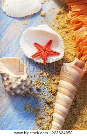 Sea shells on the background of sand. Summer beach. top view