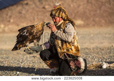 SAGSAY, MONGOLIA - SEP 28, 2017: Eagle Hunter, while hunting to the hare holding a golden eagles on his arms in desert mountain of Western Mongolia.