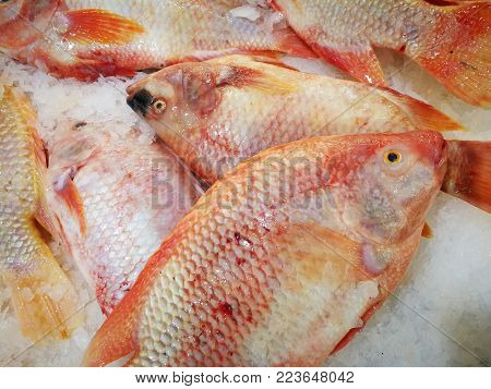 Red Tilapia/Ruby Fish in market,Shelves selling ruby fish in the market,Fresh pink frozen pomegranate fish on ice.