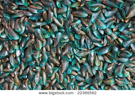 Freas mussels at the market in Thaillnd poster