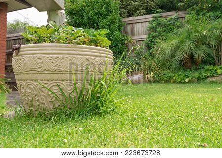 Grass overgrown at the edge of planter pot. Grass needs cutting.