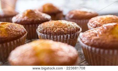 Batch of homemade freshly baked cupcakes or muffins cooling on a wire rack in the kitchen in a close up view with selective focus. Defocused blurry background.