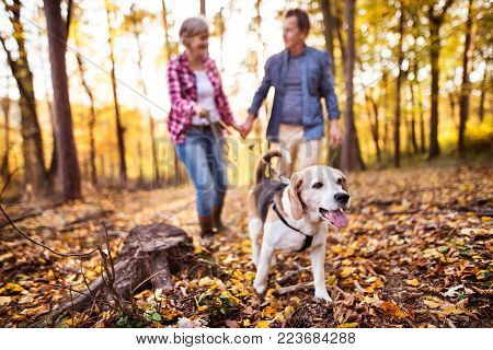 Active senior couple with dog on a walk in a beautiful autumn forest.