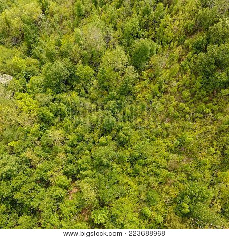 Aerial view of a temperate deciduous forest. Square composition.