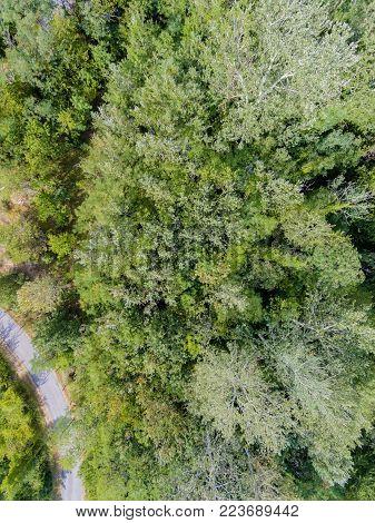 Aerial view of a road crossing a temperate forest.Vertical composition.