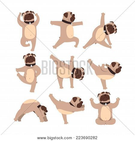 Collection with funny bulldog in different poses of yoga. Healthy lifestyle. Dog doing physical exercises. Cartoon domestic animal character. Colorful flat vector design isolated on white background.