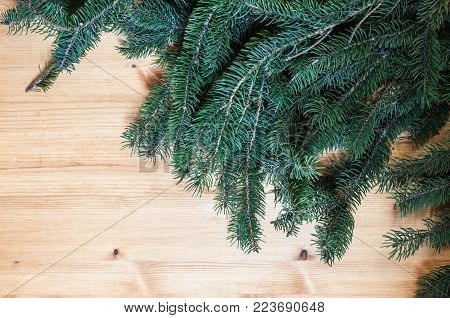 Wood surface with conifer branches for background or banner