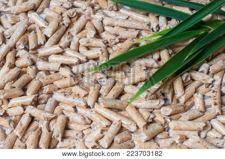 Wood pellets and green Leaves. Green energy concept.