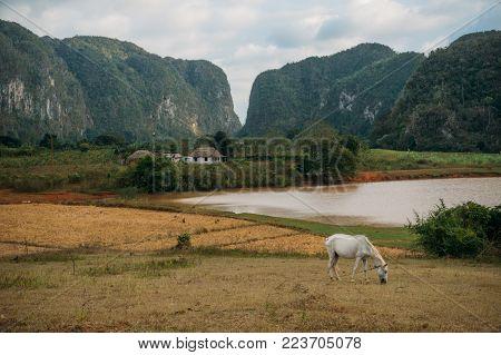horse grazing near village, Cuba, Vinales valley, November 2016