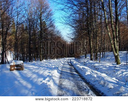 Path and traces in desolate wooden forest avenue with two rows of trees sides in Beskid Mountains near BIELSKO-BIALA city at POLAND, clear blue sky in 2016 cold sunny winter day, Europe on December.