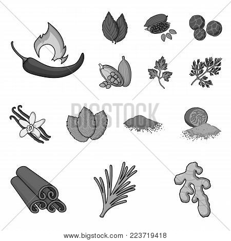 Herb and spices monochrome icons in set collection for design.Different kinds of seasonings vector symbol stock  illustration.