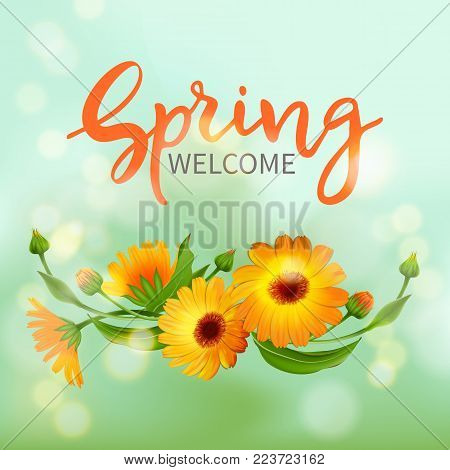 Inscription Welcome spring in background blooming flowers of calendula.Vector illustration