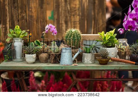 Cactus, Orchid And Green Plant Placed On Table With Wooden Wall Background. Image For Nature, Interi