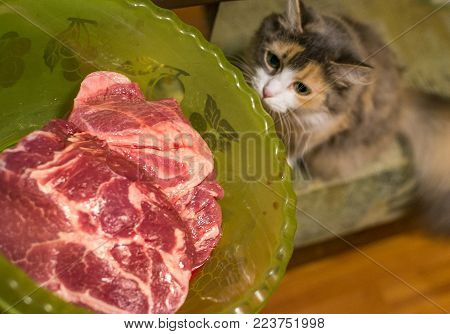 the cat looks at meat funny cat playing with food