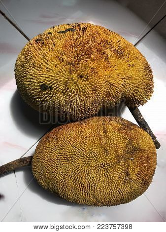 Among the most famous fruit in Borneo. The locals in Sabah called it Timadang or Tarap.