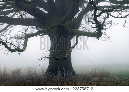 Tree In The Fog On A Meadow