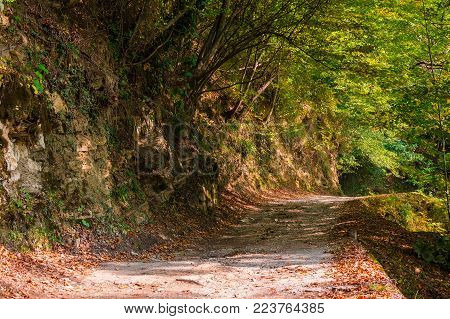 Landscape of a shady mountain trail with rocky wall and varicolored trees in sunny autumn day, Sochi, Russia