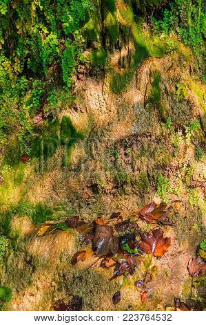 A wall of a mountain with wet vegetation and glares of sunlight in sunny autumn day