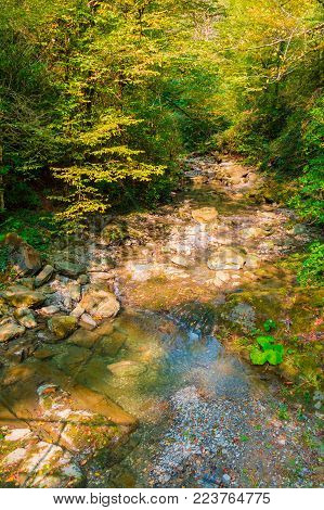 The mountain river Bezumenka and thicket in the ravine in sunny autumn day, Sochi, Russia