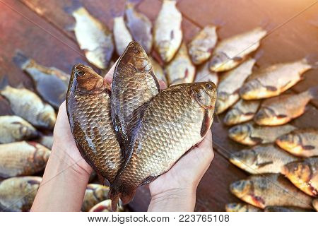 Three are fresh caught river fishes in hands. Fresh caught carp fish on wood. Catching freshwater fish on wood background. A lot of bream fish, crucian or roach on natural wood background. Background from big quantity river fishes on wooden boards laid ou