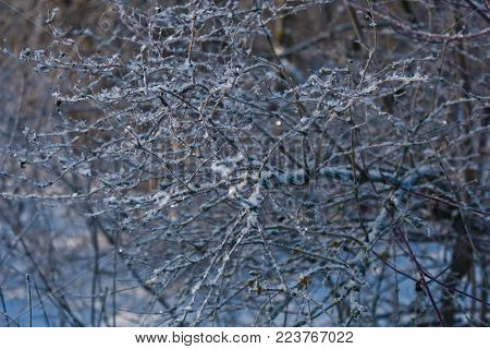 A branch of a tree in a snowball, in a snow captivity is a good splash.