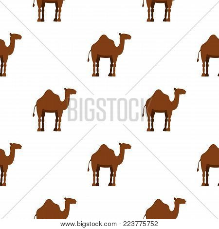 Dromedary camel pattern seamless background in flat style repeat vector illustration