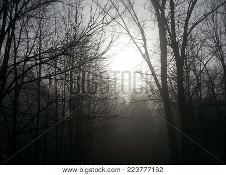 Trees in the fog. Trees in Dark light wist.