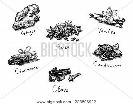 Spices. Seasoning set. Graphic sketch. Vector illustration