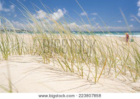 Close up of beach grass at Kirra Beach, Gold Coast, Queensland, Australia.