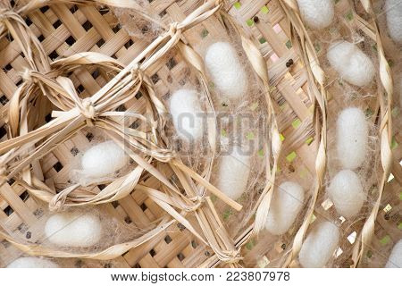 Closed up of group white cocoon of silk worm in weave nest background