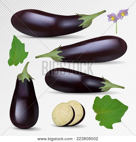 Vector Fresh Eggplant isolated on white background. Eggplant set, slice, flowers, leaf. Photo-realistic violet eggplant collection.