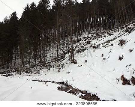 Destroyed forest in the winter, Destroyed forest as an effect of strong storm,