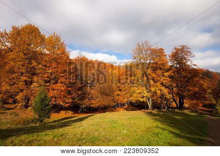 Autumn sunny woodland. Red and yellow color forest