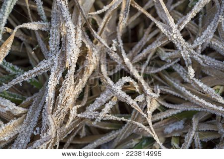 Tangled winter dry grass in the frost on the field close-up