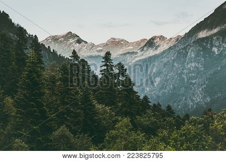 Coniferous Forest and Mountains Landscape Travel serene scenery summer green